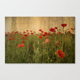 In Flanders Fields the poppies blow  Canvas Print