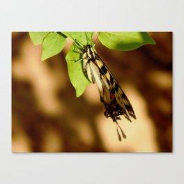 Windblown butterfly Canvas Print