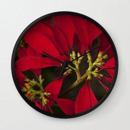 Poinsettia Red Euphorbia pulcherrima Wall Clock
