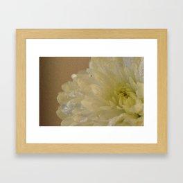 Soft Chrysanthemum Flower Framed Art Print