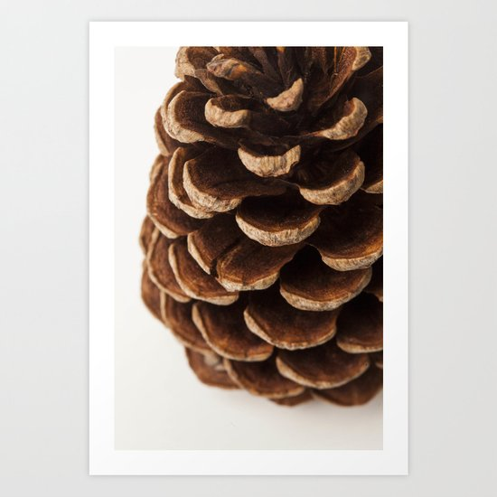 Pine Cone Detail  - Macro Art Print