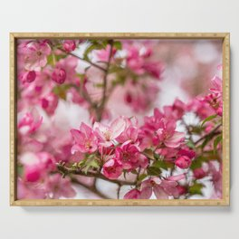 Bright Pink Crabapple Blossoms Serving Tray