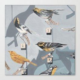 Warbler Exhibit Museum Birds Canvas Print