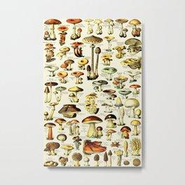 French Vintage Cream Mushrooms Chart Adolphe Millot Champignons Larousse Pour Tous Poster Metal Print