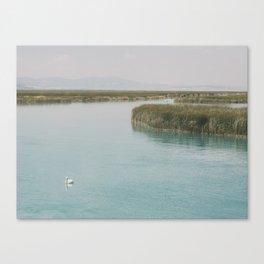 Bulrush On The Lake Canvas Print
