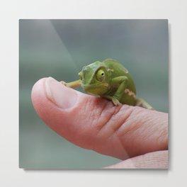 Chameleon cuteness personified Metal Print
