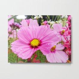 Cosmos Flower Metal Print
