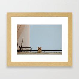 A Cretan Cat. Framed Art Print