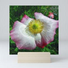 Garden Poppy Mini Art Print
