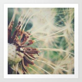 Dandelion    Spores Art Print