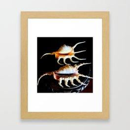 Shell We Dance, Da Da Da... Framed Art Print