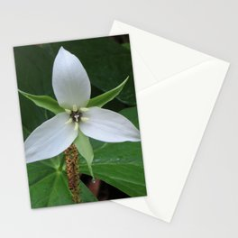 Dewdrops on Trillium, Color Stationery Cards