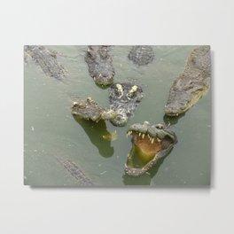 Crocodiles in river Metal Print