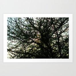 Pollock's Tree Art Print