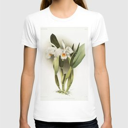 Cattleya eldorado crocata from Reichenbachia Orchids (1888-1894) illustrated by Frederick Sander (18 T-shirt