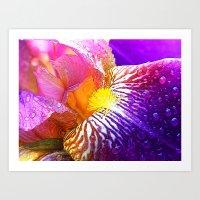 iris Art Prints featuring Iris by Tami Cudahy