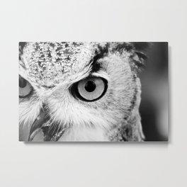 Owl Close-up Metal Print