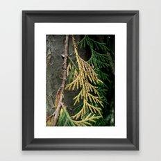 Cedar branch Framed Art Print