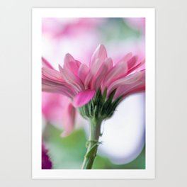 Pink Spring Flower Art Print