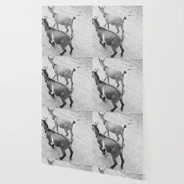 pet goats Wallpaper