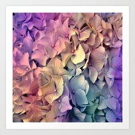 Soft Multi Color Hydrangea Art Print