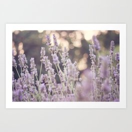 Smells like lavender Art Print