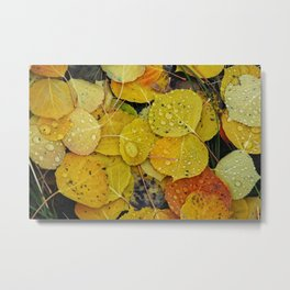 Water droplets on autumn aspen leaves Metal Print
