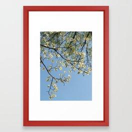 Spring Blossoms, Missouri Botanical Garden Framed Art Print