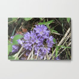 Pacific Northwest Wildflower Metal Print