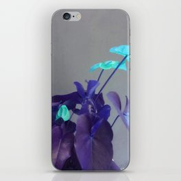 Turquoise Anthuriums iPhone Skin
