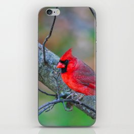 Bright Red Cardinal iPhone Skin
