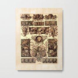 Anton Seder Shells Metal Print