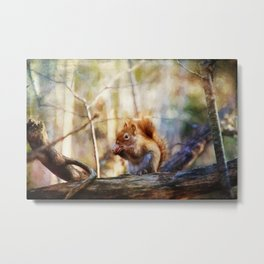 Red Squirrel with Pinecone Metal Print