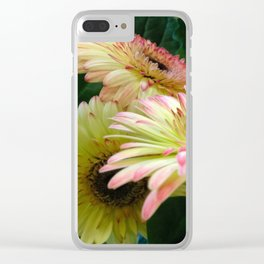 Pink Gerber Daisies Clear iPhone Case
