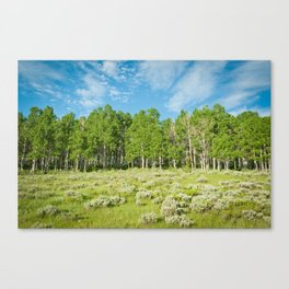 Summer skies Canvas Print