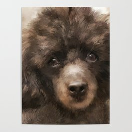 French Poodle Poster