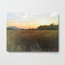 Wheat sunset Metal Print