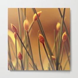 Allium 175 Metal Print
