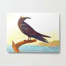 Noddy Tern Bird Metal Print