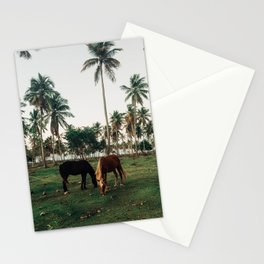 Horses in Samana, Dominican Republic Stationery Cards