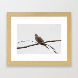 Lonesome Dove Framed Art Print