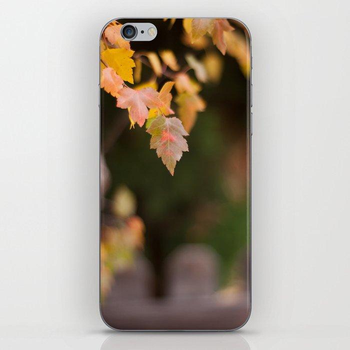 Autumn Orange iPhone Skin