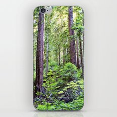The Light Through the Woods iPhone & iPod Skin