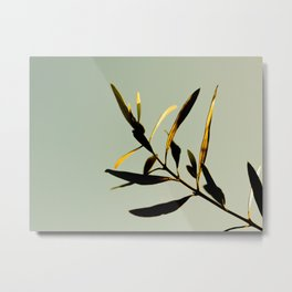 Modern Minimal Nature Photography Green Leaf plant Against A Pastel Green Turquoise Background Metal Print