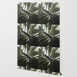 Natural Background 77 Wallpaper