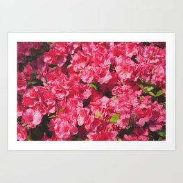 Bloom (Magenta) Art Print