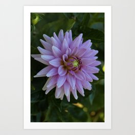 Delectable Dahlia- vertical Art Print