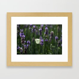 White Butterfly in a Lavender Field Framed Art Print