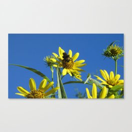 Bumble Bee on Wildflower Canvas Print