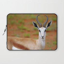 Springbok in Namibia, wildlife Laptop Sleeve